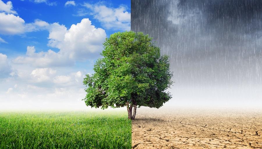 Climatic Forecast 30 Days API